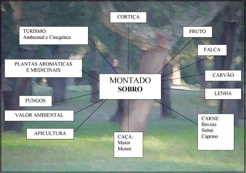 Organigrama das multiplas actividades que se podem  fazer nestes ecossistemas